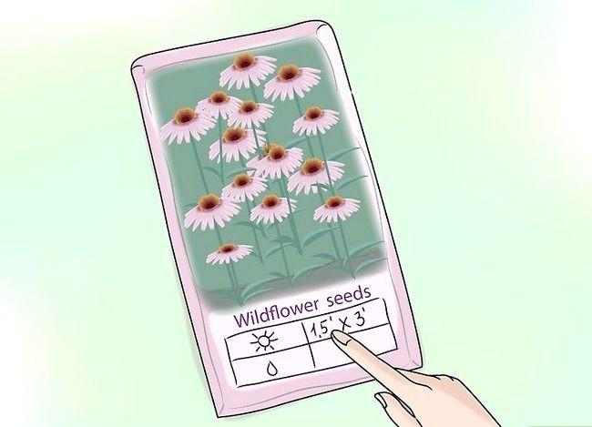 Titel afbeelding Plant Wildflowers Step 7