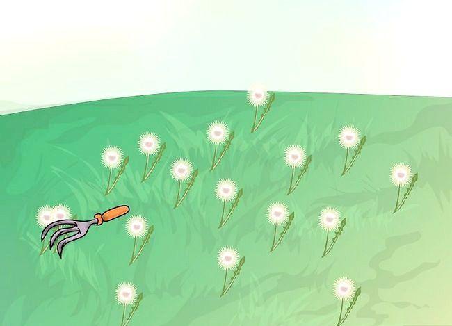Titel afbeelding Plant Wildflowers Step 2Bullet3