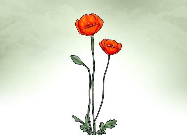 Titel afbeelding Plant Poppy Seeds Step 9
