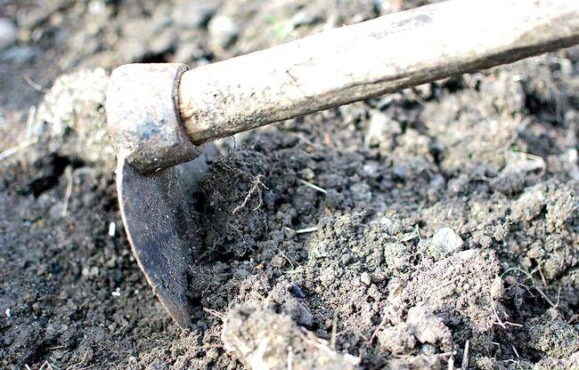 Titel afbeelding Plant Your First Garden Step 3
