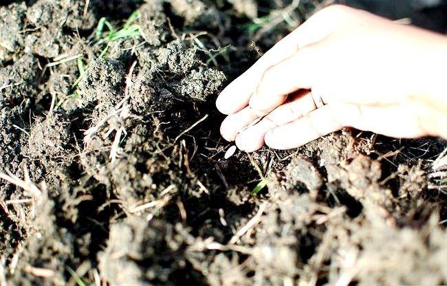 Titel afbeelding Plant Your First Garden Step 4