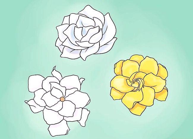 Hoe een gardenia te planten