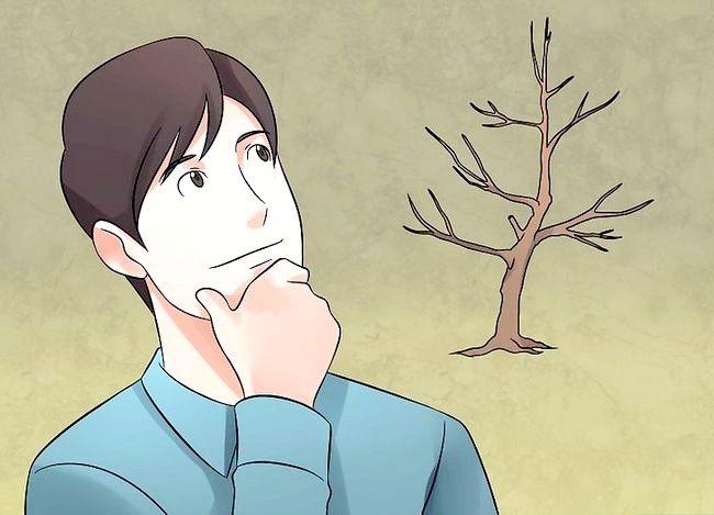 Hoe een vijgenboom te snoeien