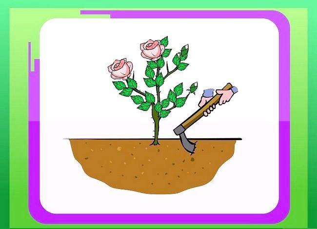 Titel afbeelding Prepare Soil for Roses Step 3