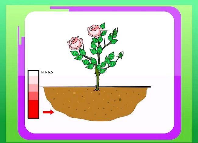Titel afbeelding Prepare Soil for Roses Step 6