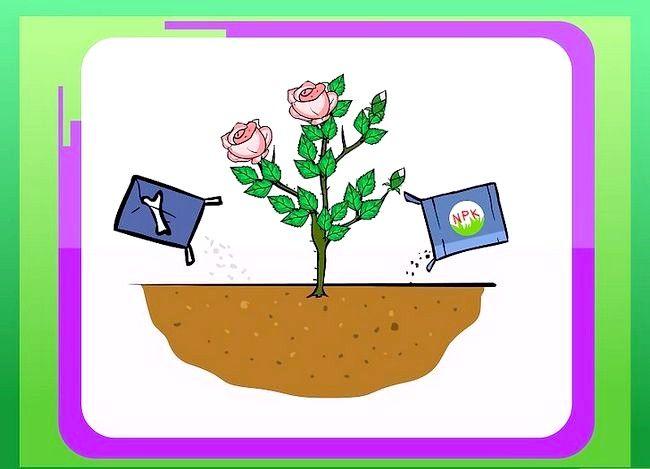 Titel afbeelding Prepare Soil for Roses Step 7