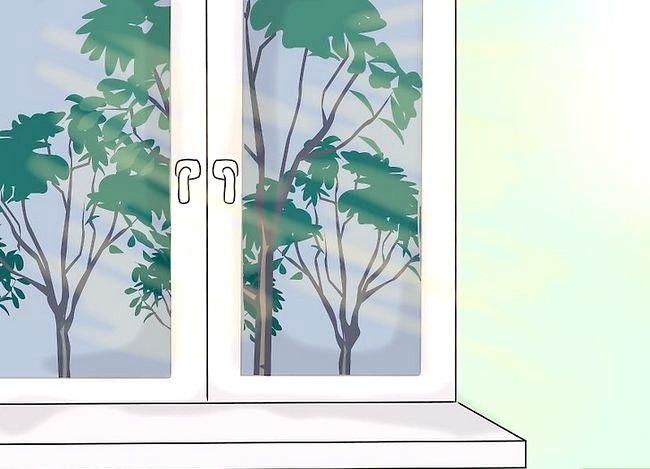 Hoe voldoende licht te geven aan kamerplanten