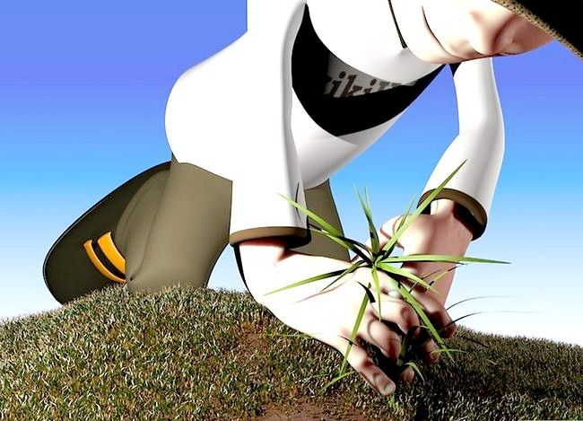 Titel afbeelding Get Rid of Crabgrass Step 7