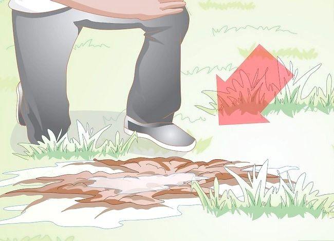 Titel afbeelding Gather Earthworms Step 12