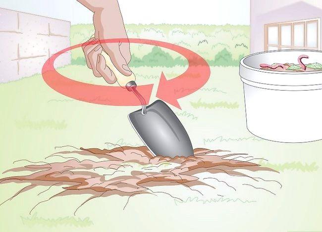 Titel afbeelding Gather Earthworms Step 3