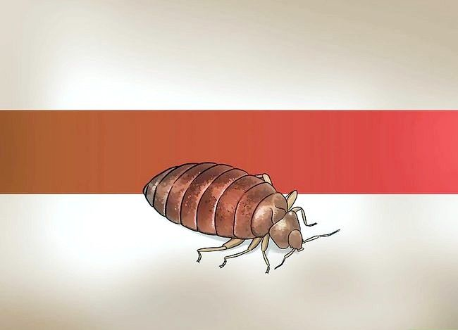 Titel afbeelding Recognize Bed Bugs Step 2