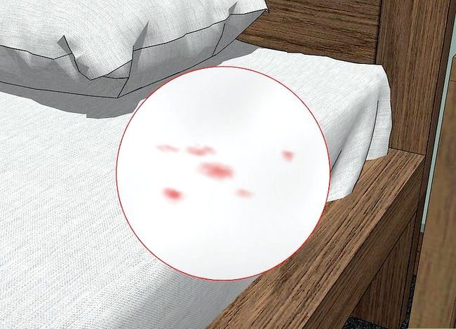 Titel afbeelding Recognize Bed Bugs Step 10