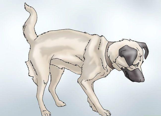 Hoe de tekenen van heupdysplasie bij honden te herkennen