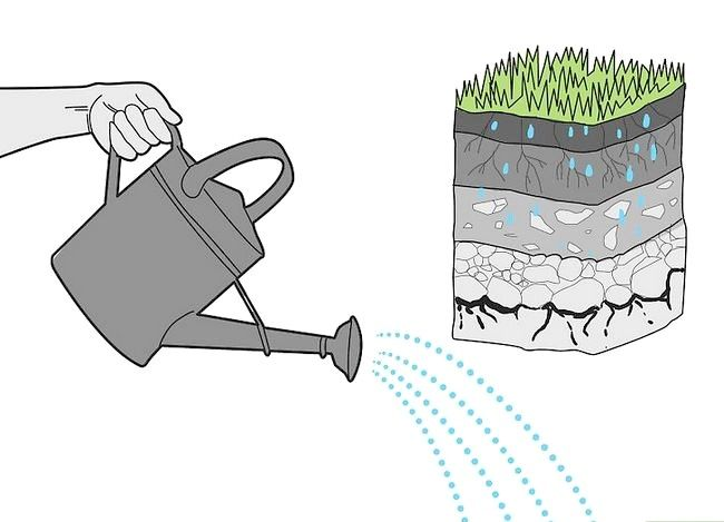 Titel afbeelding Water Your Lawn Efficiently Step 4