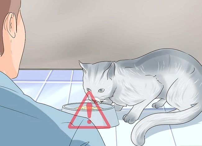 Titel afbeelding Check Cats for Worms Step 5