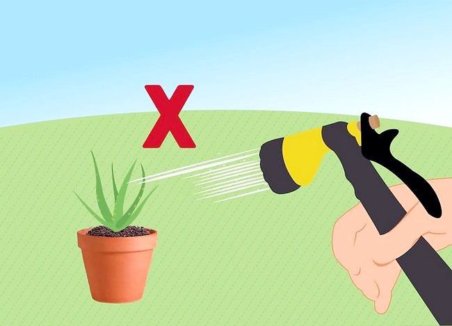 Titel afbeelding Revive a Dying Aloe Vera Plant Step 6