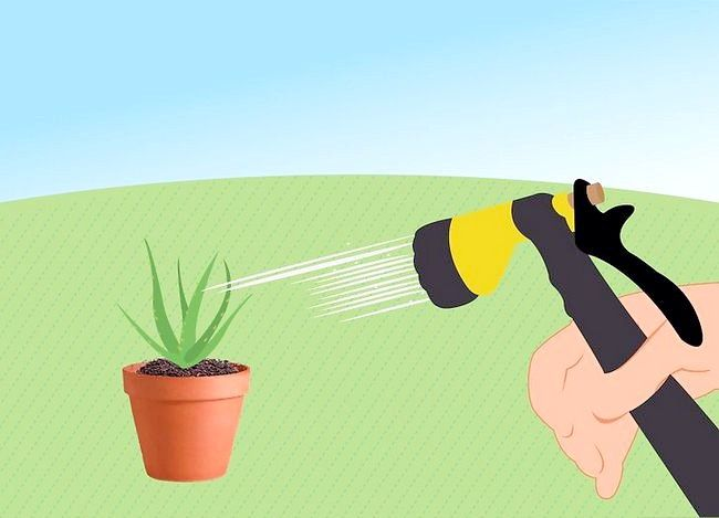 Titel afbeelding Revive a Dying Aloe Vera Plant Step 10