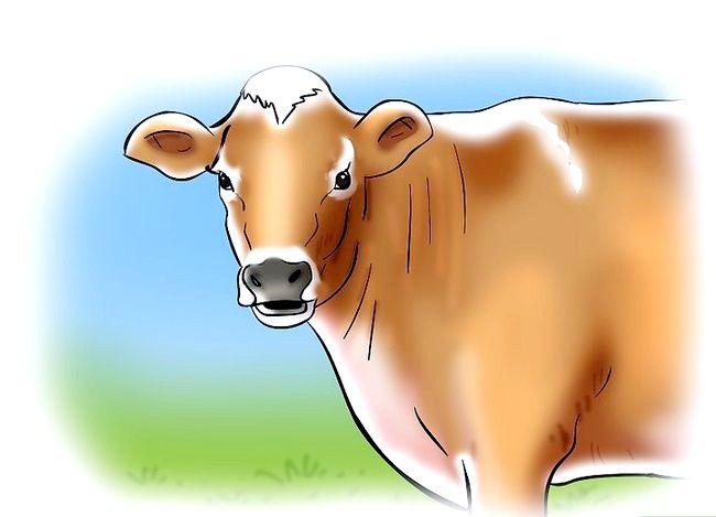 Hoe te weten wanneer een koe of een pink kouder is