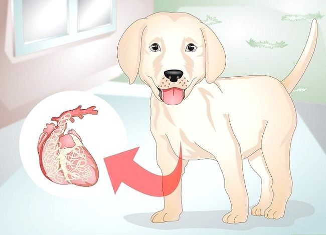 Titel afbeelding Know Your Puppy Has Worms Step 5