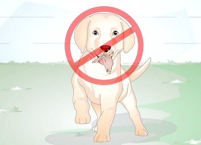 Titel afbeelding Know Your Puppy Has Worms Step 6