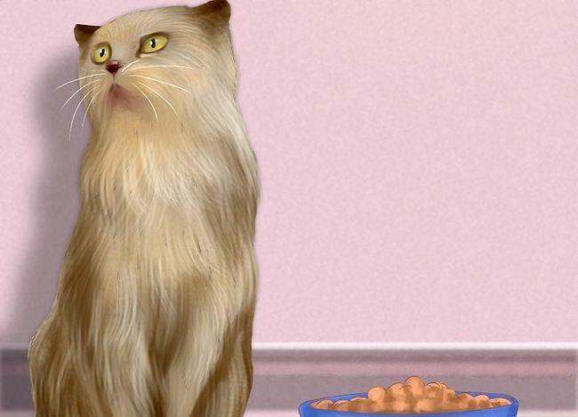Titel afbeelding Know if Your Cat Nierproblemen Stap 2