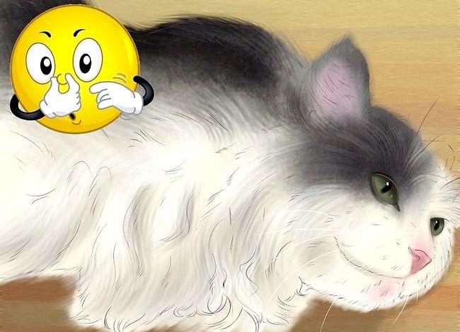 Titel afbeelding Know if Your Cat Nierproblemen Stap 3