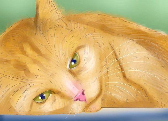 Titel afbeelding Know if Your Cat Nierproblemen Stap 4