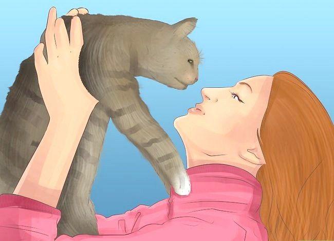 Titel afbeelding Know if Your Cat Nierproblemen Stap 6