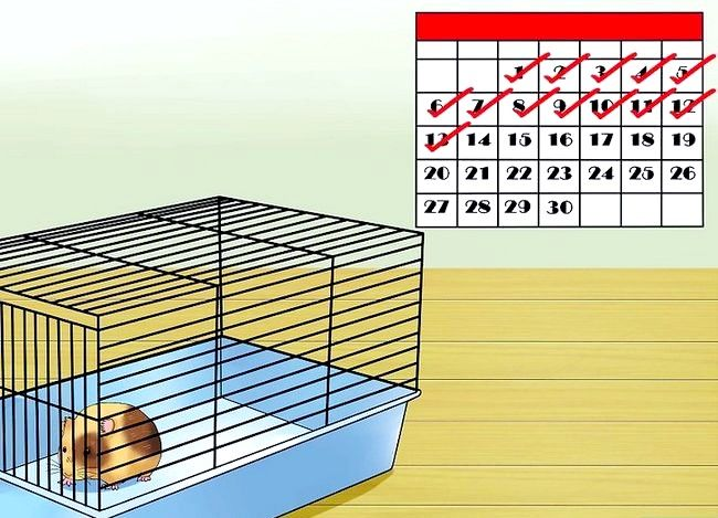 Titel afbeelding Know when Your Hamster Is Pregnant Step 12