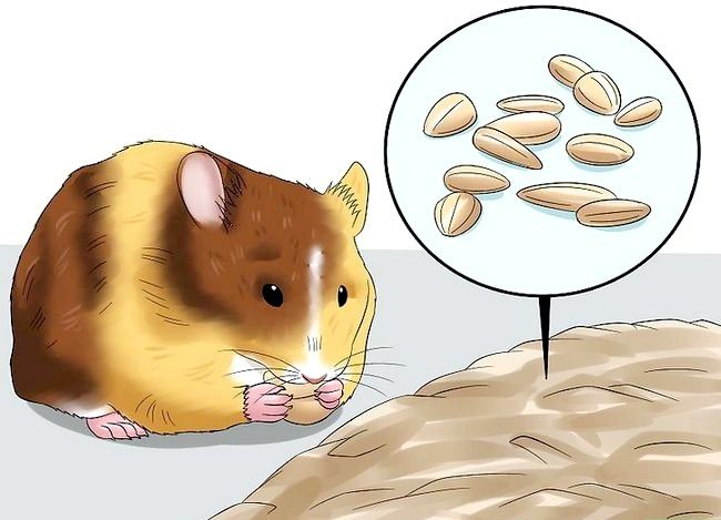 Titel afbeelding Know when Your Hamster Is Pregnant Step 7