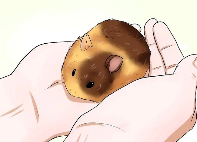 Titel afbeelding Know if Your Hamster Dying Step 6