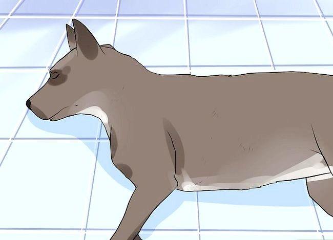 Titel afbeelding Tell if Your Dog heeft epileptische aanvallen Stap 2
