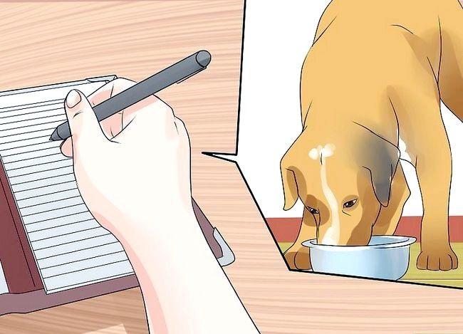 Titel afbeelding Vertel of je hond epileptische aanvallen heeft Stap 3