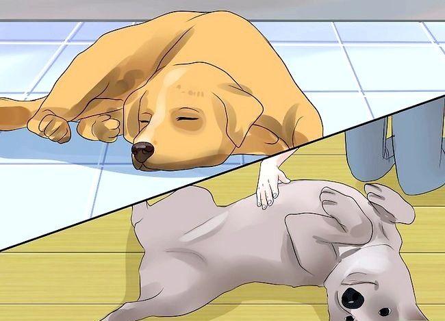 Titel afbeelding Tell if Your Dog heeft epileptische aanvallen Stap 5