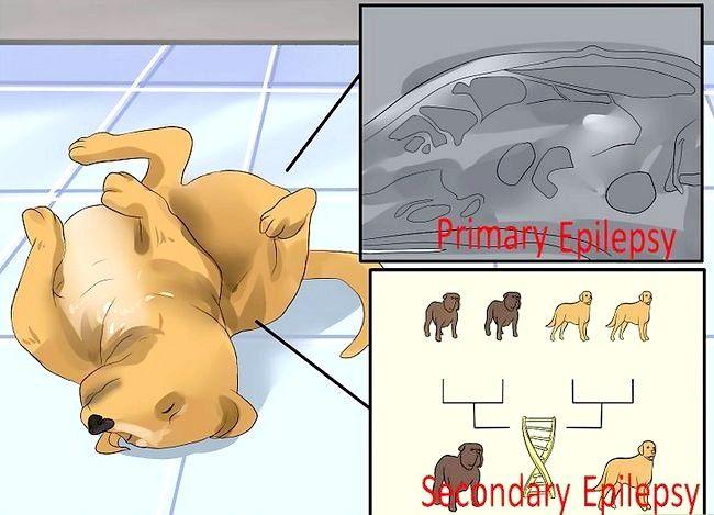 Titel afbeelding Tell if Your Dog heeft epileptische aanvallen Stap 8