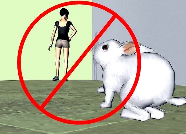 Titel afbeelding Select a Show Rabbit Step 16