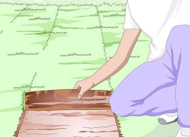 Titel afbeelding Plant Bermuda Grass Step 15