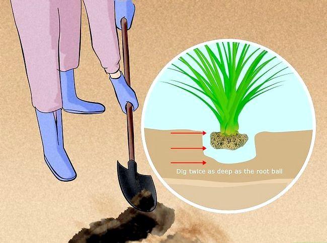 Hoe sierplanten te planten