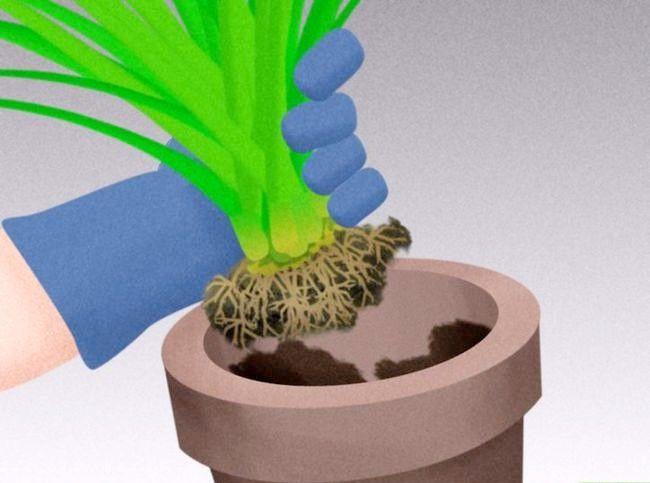 Titel afbeelding Plant Landscape Grasses Step 4