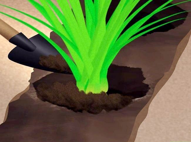Titel afbeelding Plant Landscape Grasses Step 8