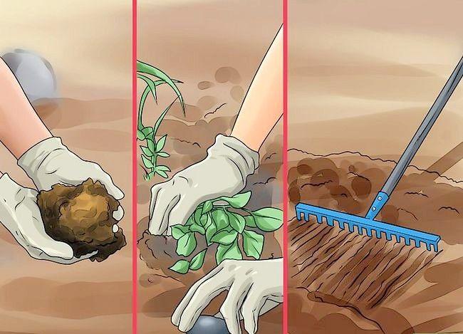 Titel afbeelding Plant Apple Seeds Step 17