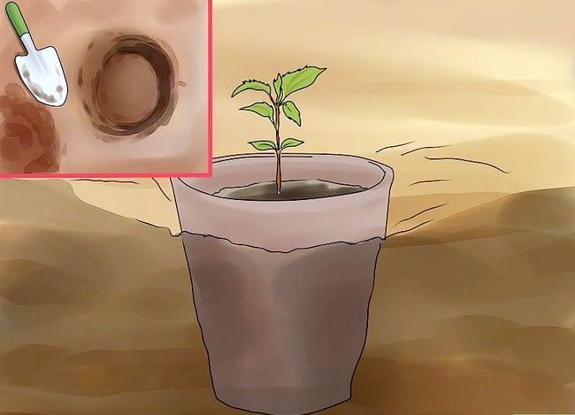 Titel afbeelding Plant Apple Seeds Step 18