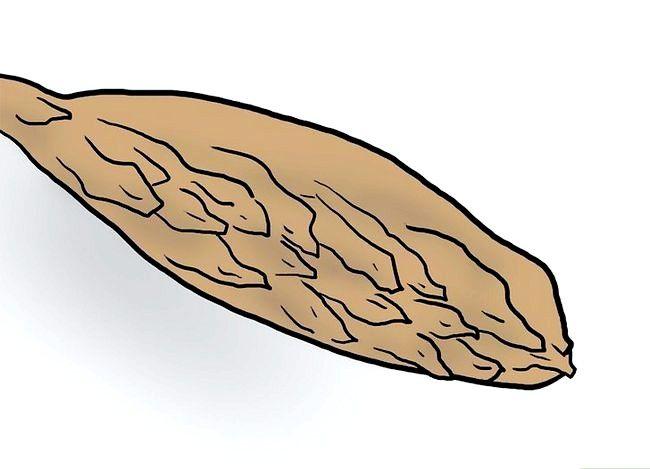 Titel afbeelding Plant Plumeria Seeds Step 1