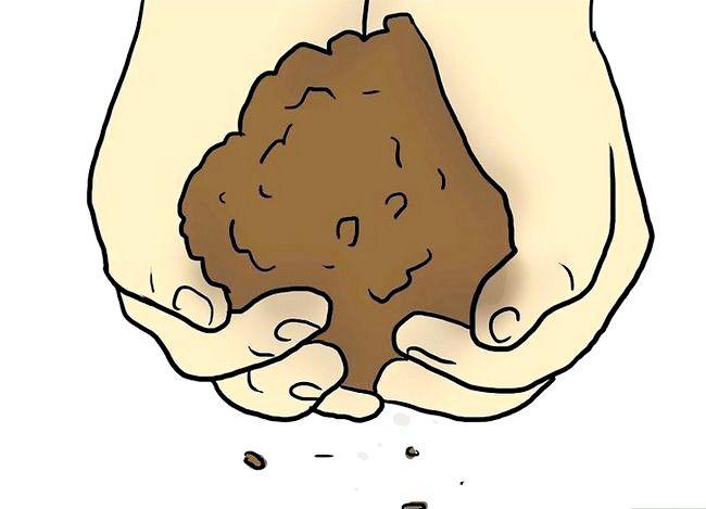 Titel afbeelding Plant Plumeria Seeds Step 2