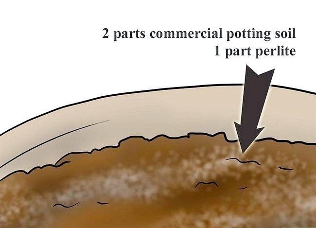 Titel afbeelding Plant Plumeria Seeds Step 2Bullet1