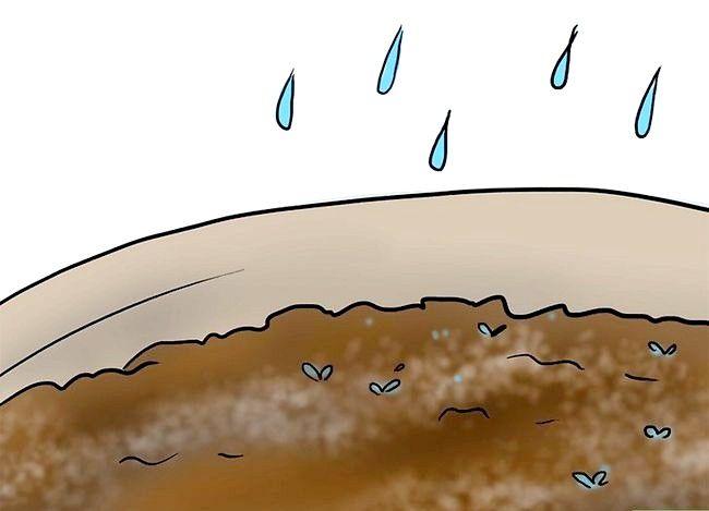 Titel afbeelding Plant Plumeria Seeds Step 2Bullet2