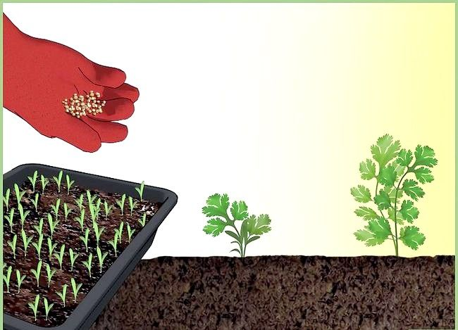 Titel afbeelding Plant a Seed Intro
