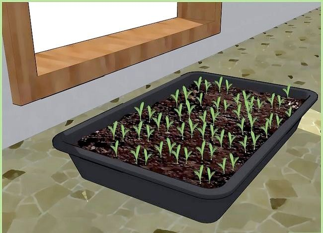 Titel afbeelding Plant a Seed Step 7