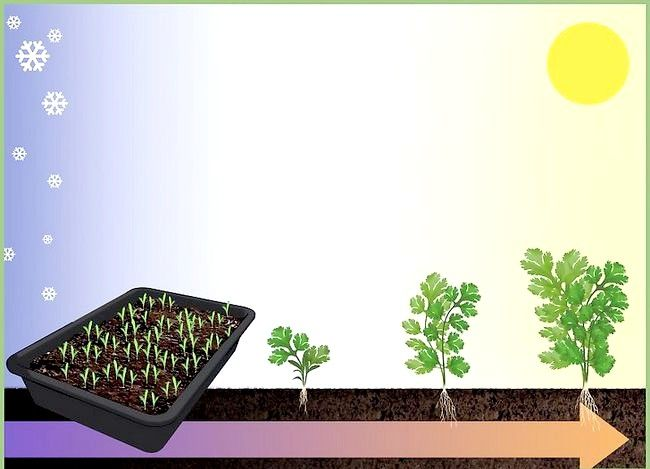 Titel afbeelding Plant a Seed Step 9