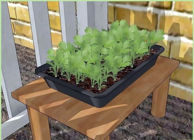 Titel afbeelding Plant a Seed Step 10